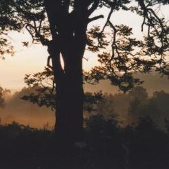Rwanda Nature 2